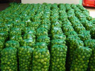 Lim�es